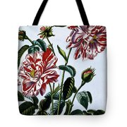 The Variegated Rose Of England Tote Bag