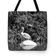The Waterbirds Tote Bag