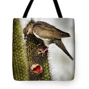 The White Winged Dove  Tote Bag