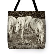 The Wild Horses Of Shannon County Mo 7r2_dsc1111_16-09-23 Tote Bag