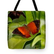 The Wizard Butterfly Tote Bag