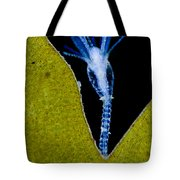 Thecate Hydrozoan Clytia Sp., Lm Tote Bag