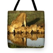 Thirsty Lions Tote Bag