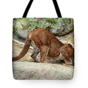 Thirsty Puma  Tote Bag