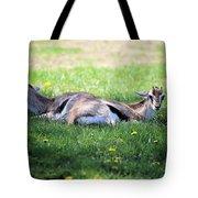 Thompson Gazelles Tote Bag