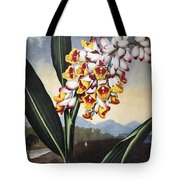 Thornton: Shell Ginger Tote Bag