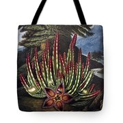 Thornton: Stapelia Tote Bag