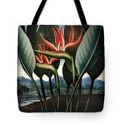 Thornton: Strelitzia Tote Bag