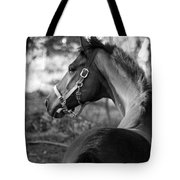 Thoroughbred - Black And White Tote Bag