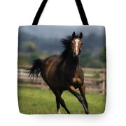 Thoroughbred Horses, Yearlings Tote Bag by The Irish Image Collection