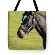 Thoroughbred Portrait Three Tote Bag