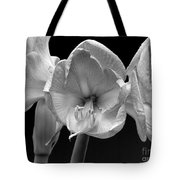 Three Amaryllis  Black And White Print Tote Bag