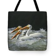 Three American Pelicans Tote Bag
