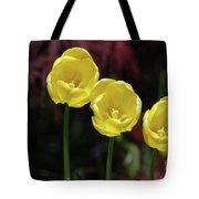 Three Blooming Yellow Tulips Of Different Heights Tote Bag