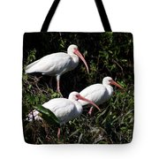 Three Buddies - White Ibis Tote Bag