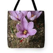 Three Lovely Saffron Crocus Blossoms Tote Bag