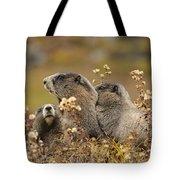 Three Marmots 2 Tote Bag