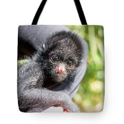 Three Month Old Spider Monkey Tote Bag