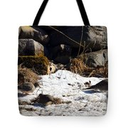 Three Mourning Doves Tote Bag