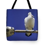 Three Pelicans On A Lamp Post Tote Bag