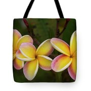 Three Pink And Yellow Plumeria Flowers - Hawaii Tote Bag