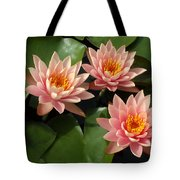 Three Pink Water Lilies Tote Bag