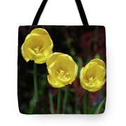 Three Pretty Blooming Yellow Tulips In A Garden Tote Bag