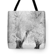Three Snow Frosted Trees In Black And White Tote Bag