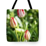 Three Striped Tulips Tote Bag
