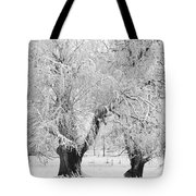 Three Trees In The Snow - Bw Fine Art Photography Print Tote Bag