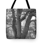 Three Trunk Tree, Whitley Mill Tote Bag