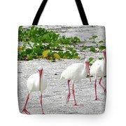 Three White Ibis Walking On The Beach Tote Bag