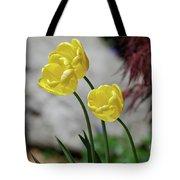 Three Yellow Garden Tulips Flowering In Spring Tote Bag