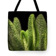 Thyme Leaves Tote Bag
