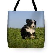 Tibetan Terrier Puppy Tote Bag