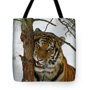 Tiger 3 Tote Bag by Ernie Echols