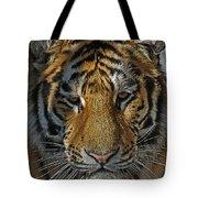 Tiger 5 Posterized Tote Bag