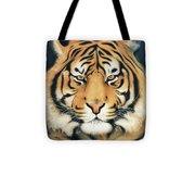 Tiger At Midnight Tote Bag