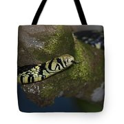 Tiger In The Tree.. Tote Bag