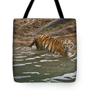 Tiger In The Water Tote Bag