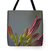 Tiger Lilly Buds 2 7172017  Tote Bag