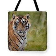 Tiger Look Tote Bag
