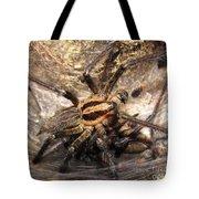 Tiger Spider  Tote Bag