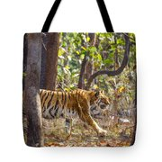 Tigress Walking Through Sal Forest In Pench Tiger Reserve  India Tote Bag