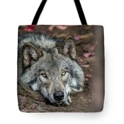 Timber Wolf Picture - Tw286 Tote Bag
