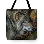 Timber Wolf Picture - Tw417 Tote Bag
