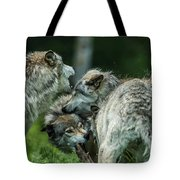 Timber Wolf Picture - Tw70 Tote Bag