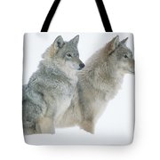 Timber Wolf Portrait Of Pair Sitting Tote Bag