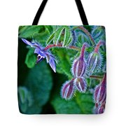 Tiny Blue Flower On A Bush At Pilgrim Place In Claremont-california  Tote Bag