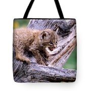 Tiny Bobcat Kitten Tote Bag